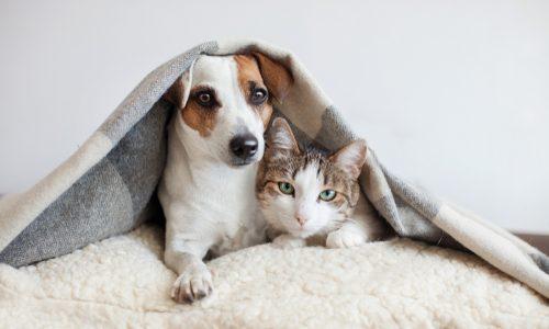 犬を飼っている人は「飼い主さん」ではなく「○○」