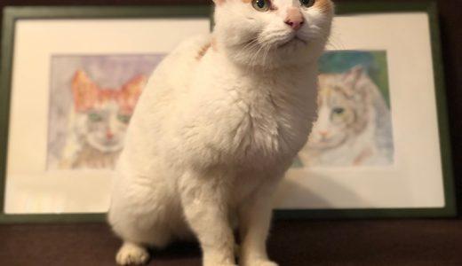 大好きな猫が亡くなって思うこと