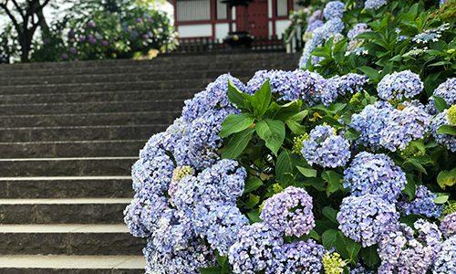 あじさい寺で有名な本土寺にお参りしてきた話